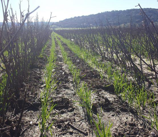 A cerca de Crops